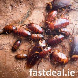 €59 ~ O'Sullivan Pest Expert
